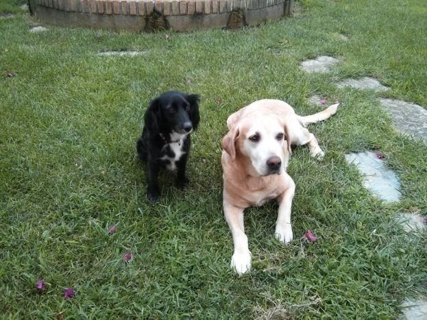 Rasti e Irachu en los jardines del Hotel Sol, Benicarló