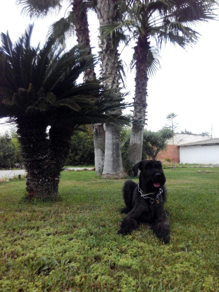 Coco en el jardín del Hotel Sol de Benicarló
