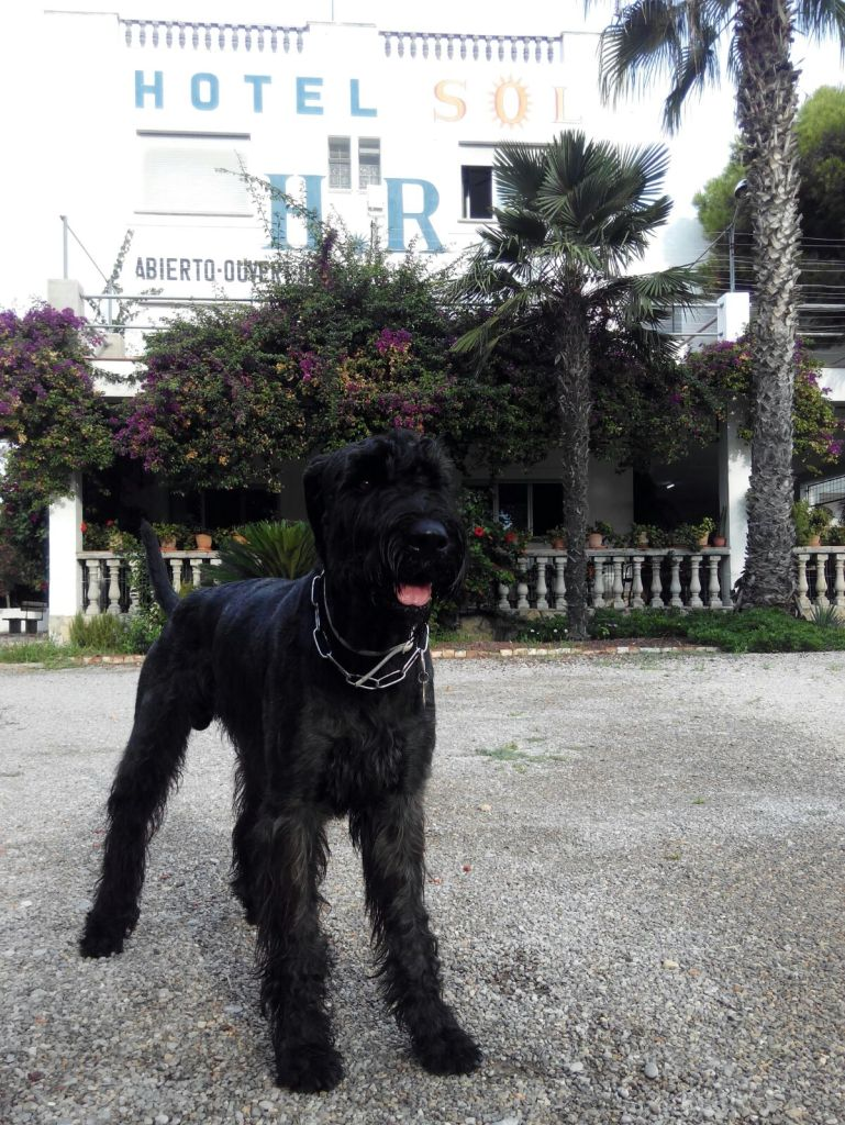 Las vacaciones de Coco en el Hotel Sol de Benicarló